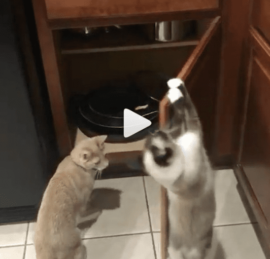 Cats Team Up For Trouble
