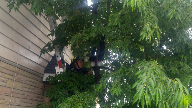 Boy Caught in Tree While Attempting to Save Kitten