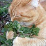 Catnip Demystfied