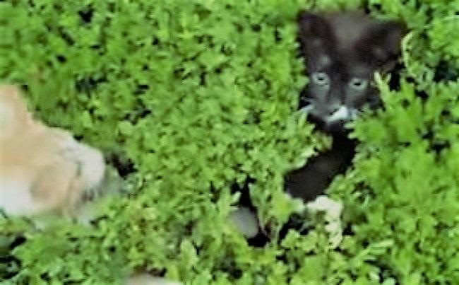 peek-a-boo kittens
