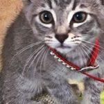 Kitten Stolen From Shelter Safely Returned
