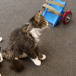 Students Use Ingenuity to Create 3D Wheelchair for Special Needs Kitty