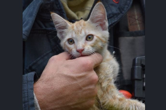 Video Captures Firefighter Rescuing Kitten From House Fire