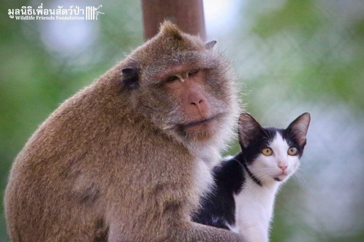 Rescued Macaque Jo Jo and Alan the Stray Cat Find Unique Friendship