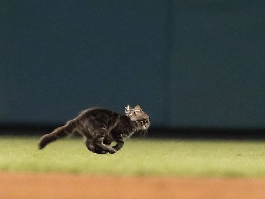 Rally Cat Caught in Game of Pickle Between Cardinals &  STLFCO