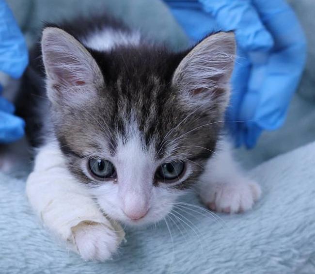kitten rescue 4