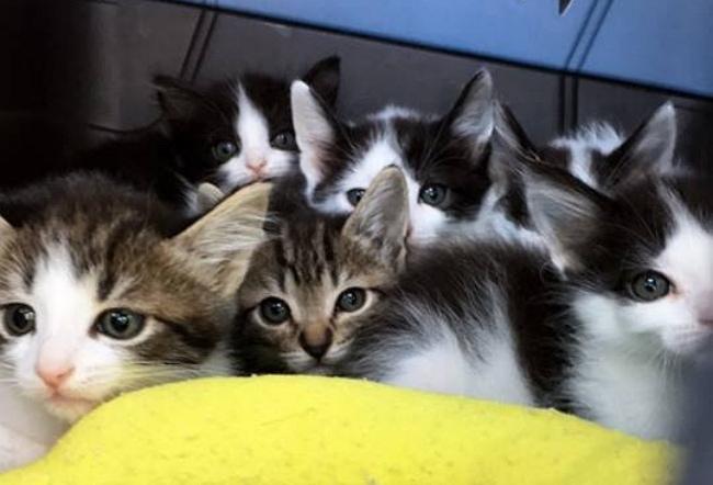 kitten rescue 5