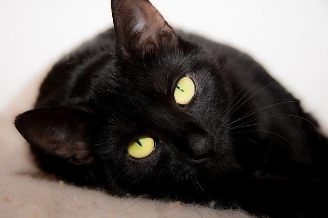 cat-316477_640