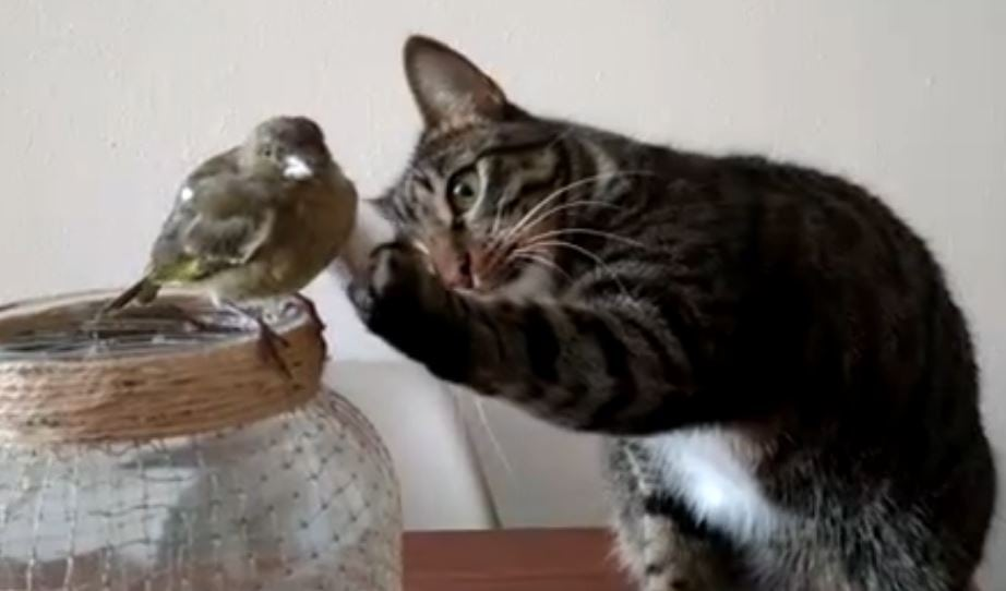 kitty pets bird