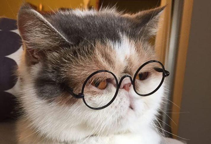 Instagram Sensation: Japanese Cat Has Unique Sense of Style