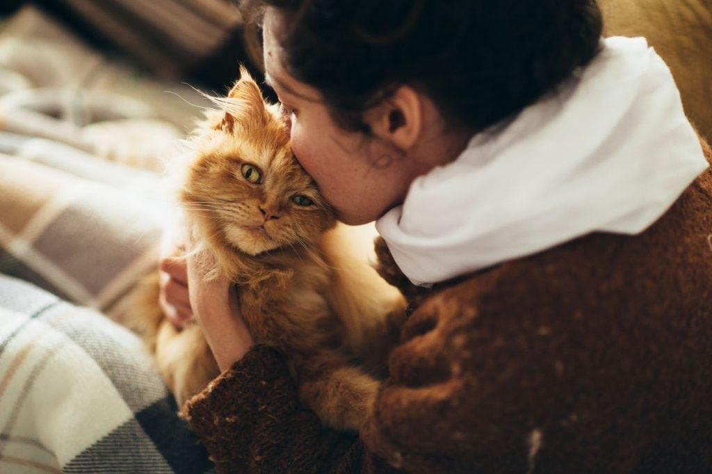cat sniff 3