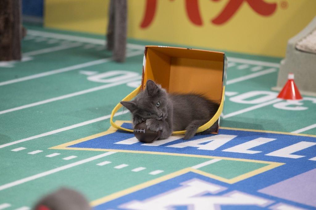 kitten bowl 4