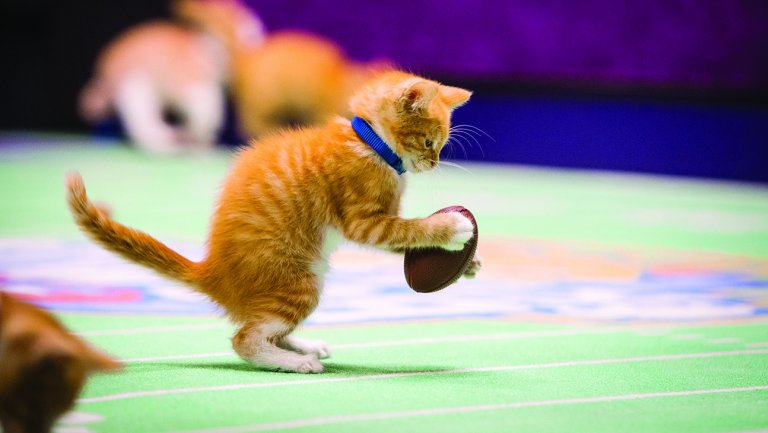 kitten bowl 5