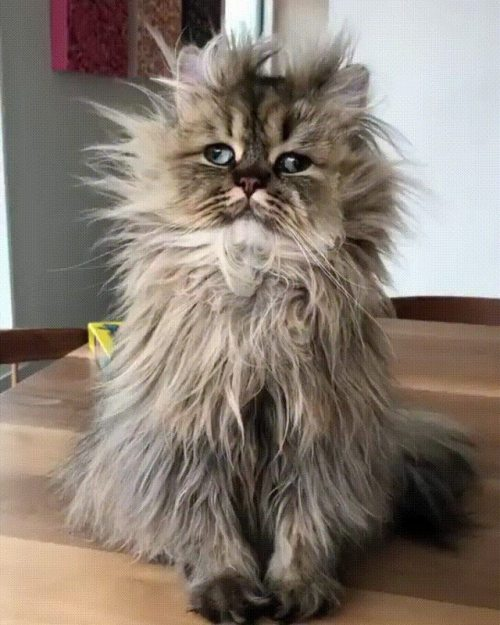Cats Having A Bad Hair Day