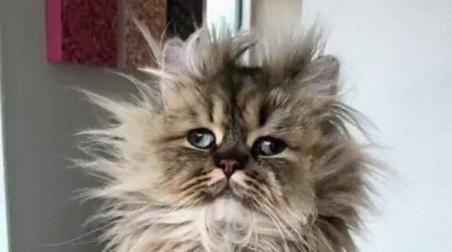 Cutest Bad Hair Day, Ever!