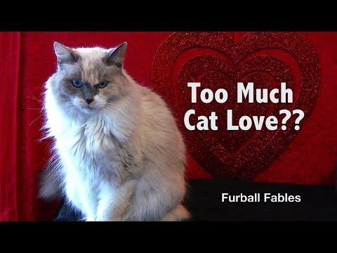 Can You Love Your Cat TOO Much?