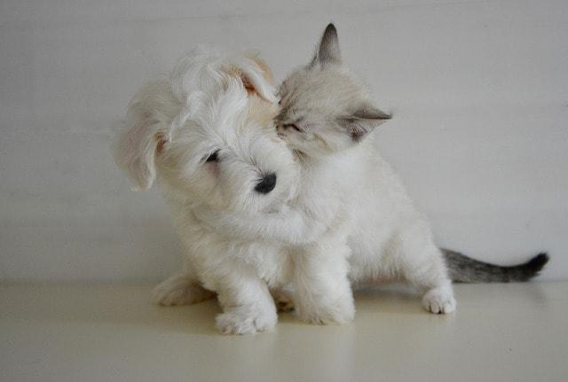 kiss-2728106_640
