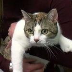 Cat is Tops in Toes for Guinness World Record