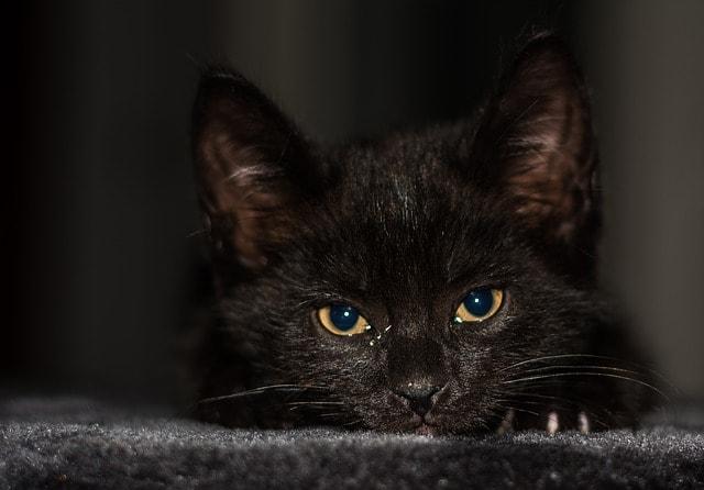 baby-cat-2119505_640