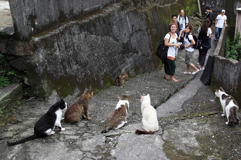 Taiwanese Village Boosts More Four-Legged Than Two-Legged Residents