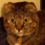 Frostbitten Cat Defies Survival Odds