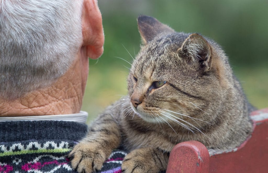 Elder-Care-for-Cats_506238652