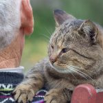 "Cats Cradle Documentary Captures Senior ""Cats Heaven"" on Earth"