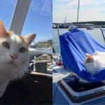 Salty, Top Cat on the Seas